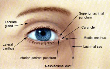 Oculoplasty Procedure in Pitampura, Oculoplasty Procedure in Delhi, Oculoplastic surgeon In Delhi